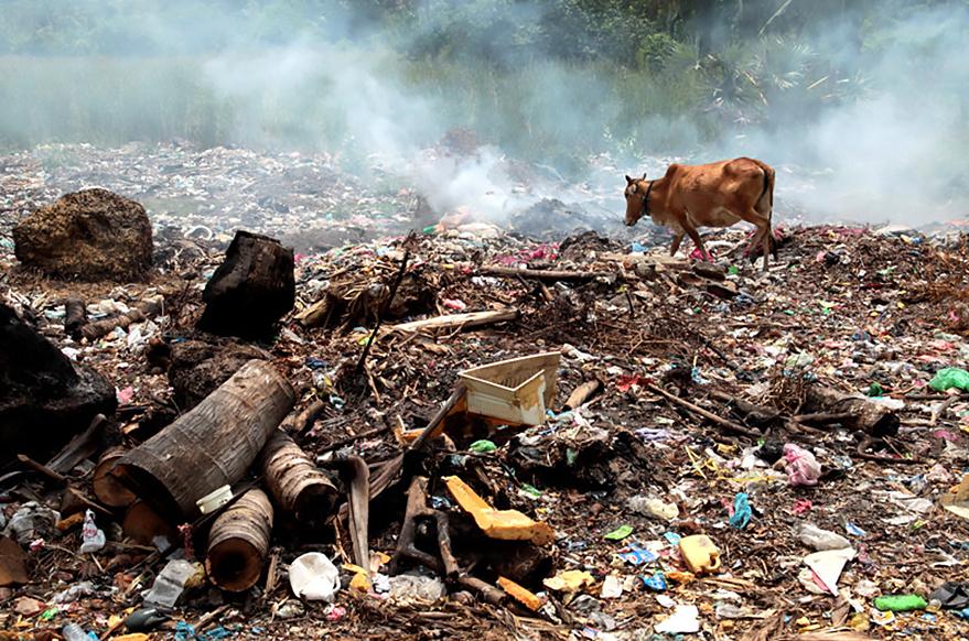Qualmende Müllhalde in Sri Lanka mit einer nach Futter suchenden Kuh im Umwelt-Verschmutzung; Sri Lanka; qualmende Müllhalde; Futter; Kuh, reportage_foto_muellhalde_umwelt_klewar-photographie_frankfurt