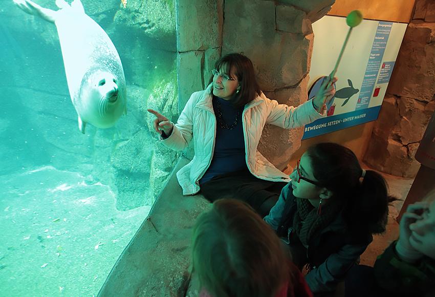 Robbe; Zoo; Kinder; Padagogik; Robbengehege; Zoobesucher; Wasser; Robben-Gehege, Museumspädagogik im Zoo Frankfurt, reportage_foto_zoo-frankfurt_robbe_paedagogik_klewar-photographi